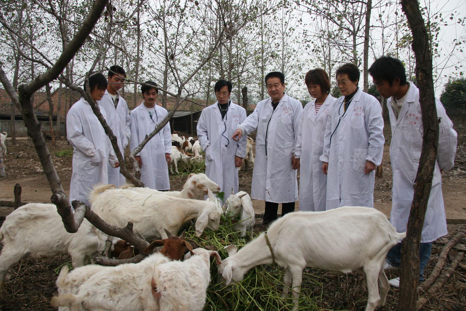 畜牧兽医(小动物医学方向)